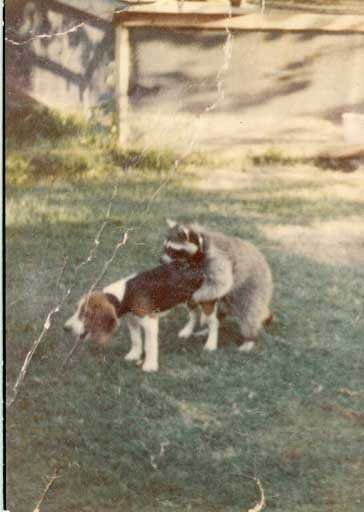 Bad doggy.  BAD DOGGY.